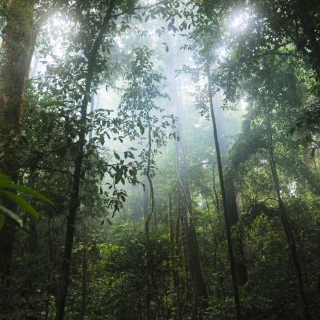 Spirito Tribale per gli alberi
